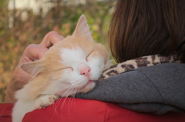 Les Chats Aiment les Caresses ? (ce que vous devez savoir)