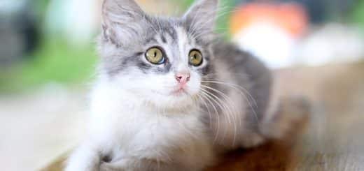 Peut On Manger la Nourriture Grignotée par un Chat