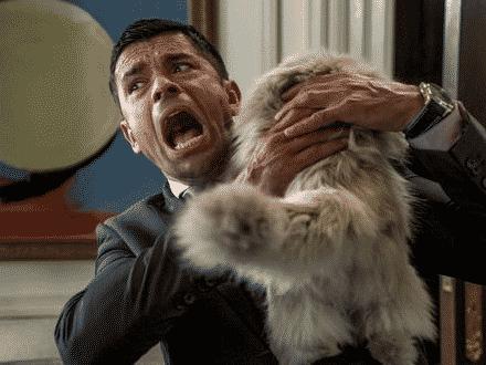 Pourquoi J'ai Peur des Chats