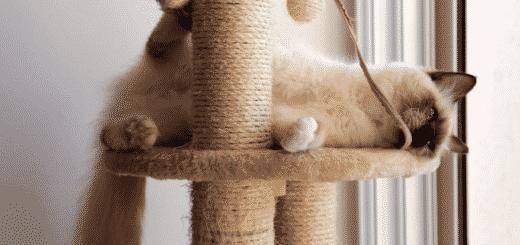 Pourquoi Mon Chat a Peur de Moi