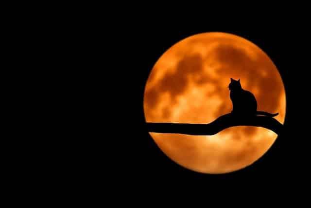 Que Font Vraiment Les Chats La Nuit ? (et que vous ne voyez jamais)