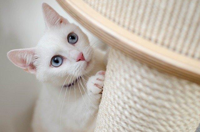 Comprendre Pourquoi les Chats Aiment être en Hauteur
